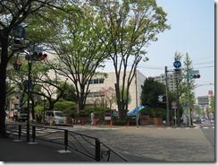 鷺沼駅街路樹 001